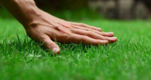 Какой газон выбрать: рулонный или посевной