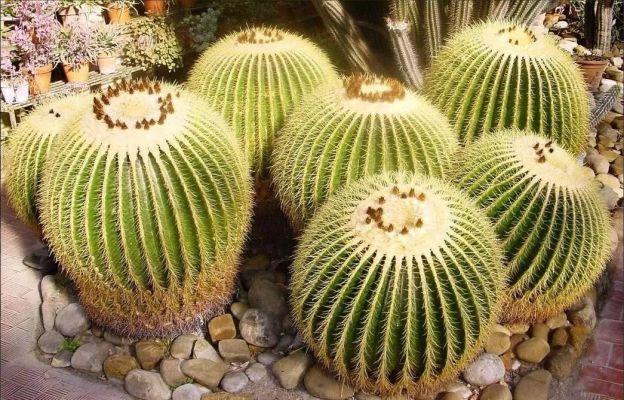 кактусы уход в домашних условиях