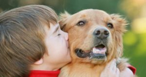 Собака для ребенка: какую выбрать