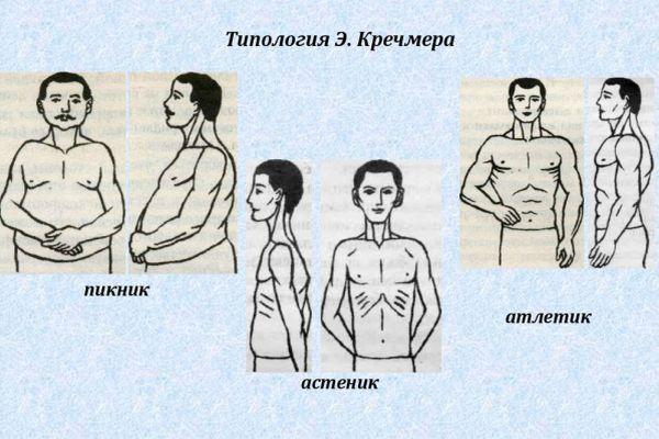 типология по кречмеру