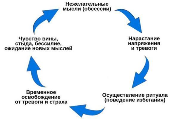 цикличность поведения